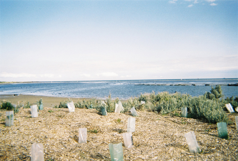 Disposable Camera Project: First Edition. Image by Hollie Heales